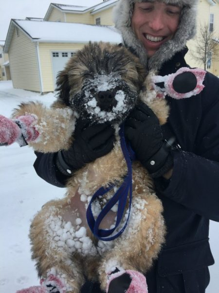 Winter With A Wheaten Terrier Puppy